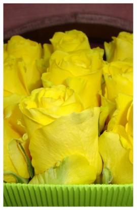 B1 - Spanilé žlté ružičky pre krásne družičky aj dobré detičky