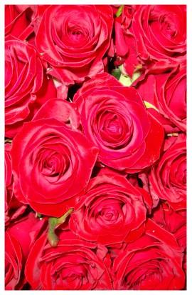 K39 - Červené ruže
