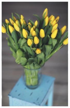 K49 - Žlté tulipány dovezené z Holandska