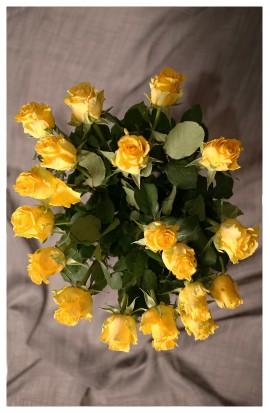 KM2 - Žlté ruže vyjadrujúce jemnosť