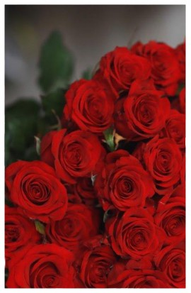 KM4 - Červené ohnivé ružičky