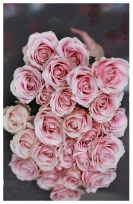KM5 - Staroružové ružičky