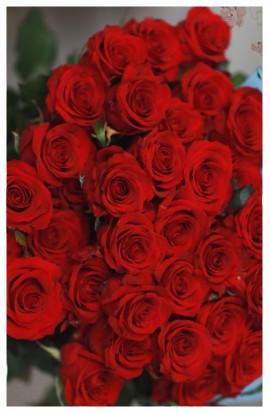 RX1 - Ruže exkluzívne ohnivé