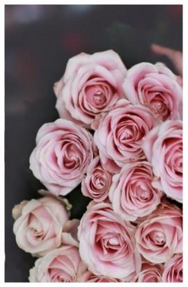 RX2 - Ruže exkluzívne staroružovej farby