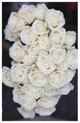 RX3 - Ruže exkluzívne bielo-smotanové