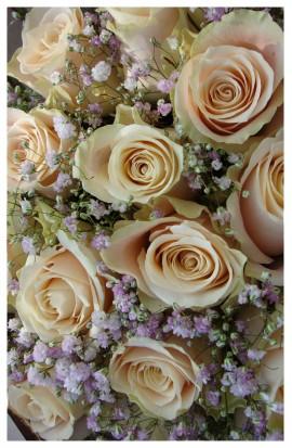 SV6 - Kytička lososových ruží